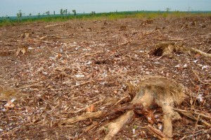 Clear cutting kills more than just trees. It destroys entire forest communities as it paves the way for massive future spring run-off and flooding