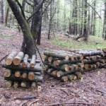 Inoculated log stacks